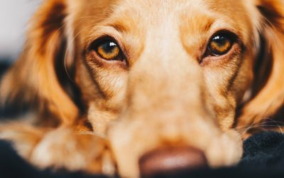 Tips para cuidar los huesos y articulaciones de tu perro
