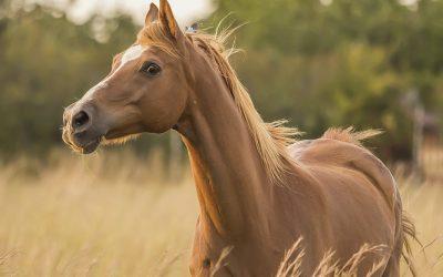 Cómo cuidar el pelo del caballo