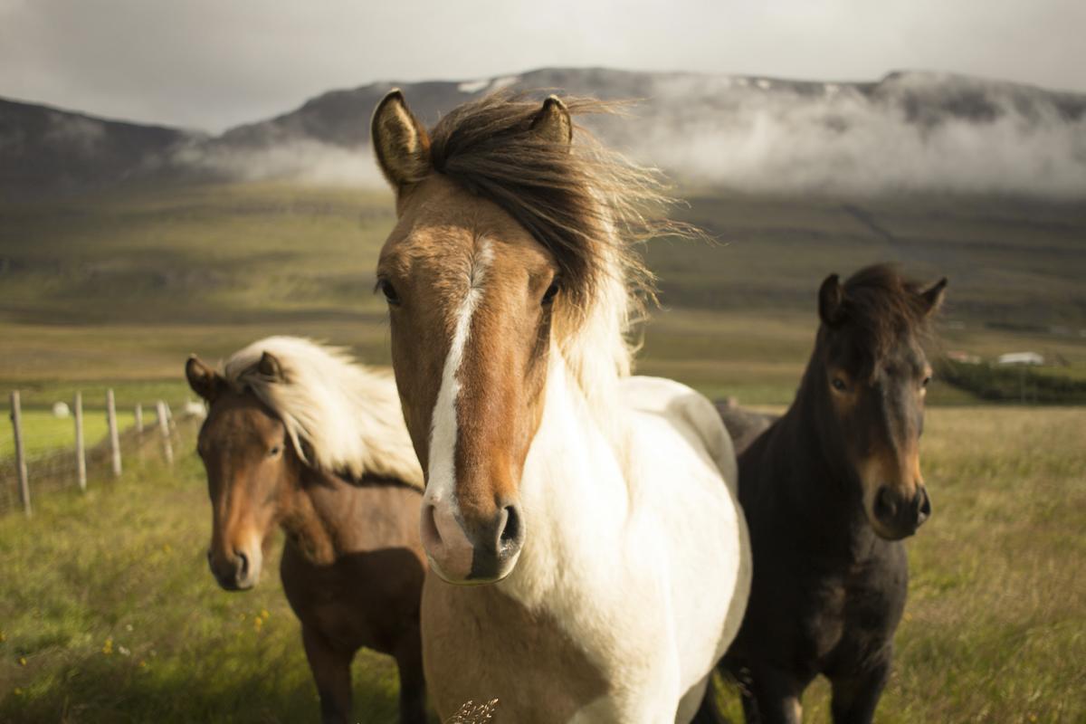 cuidar pelo caballo consejos