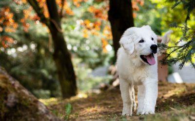 Un otoño saludable para tu perro