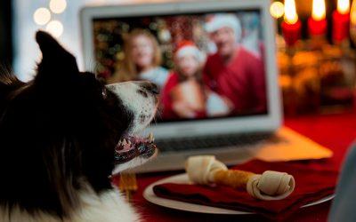 Ideas para compartir la Navidad con tu mascota