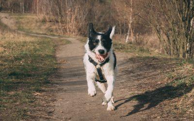 Consejos para fortalecer las articulaciones de un perro