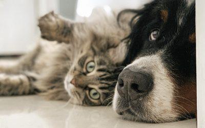 Omega-3 para perros y gatos